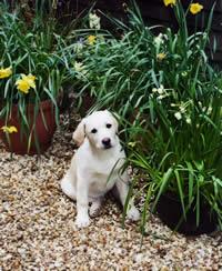 img-puppy-garden